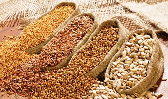 gabonafélék a visszér ellen