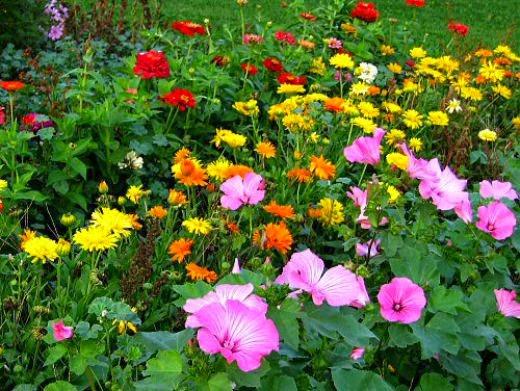 visszérrel iható gyógynövények