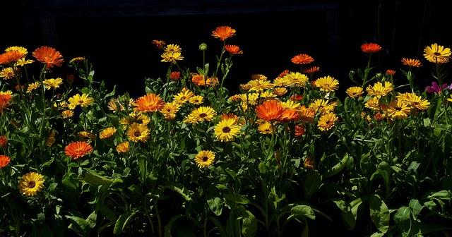 gyógynövények visszerek kezelésére és)