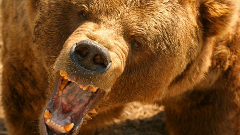 Medve Medical Egészségközpont az Ön mielőbbi gyógyulásáért!