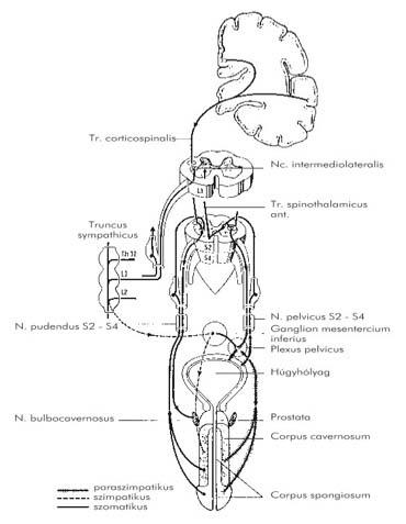 Katéterterápiás Osztály   Goki